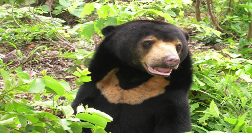 Free the Bears at Phnom Tamao